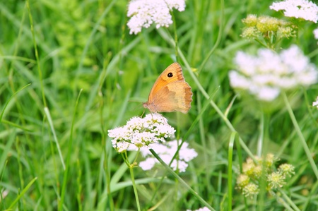 Beautiful white flowers and butterfly in a garden of grass Stock Photo - 11099553