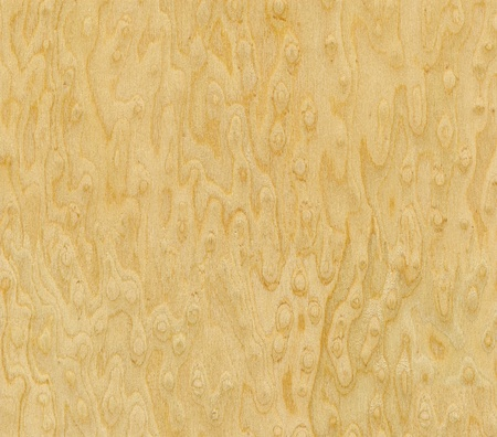 Wood grain texture. Bird photo