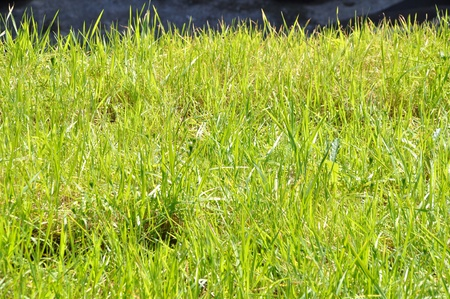 Background grass texture for designers photo