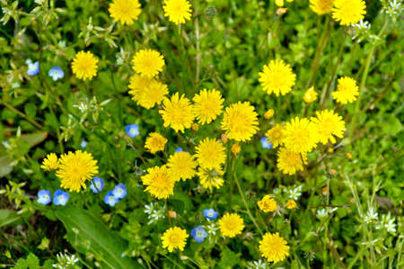 Beautiful yellow flowers in a garden of grass photo