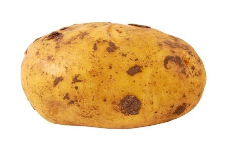 russet: Fresh Potato Isolated on White Background Stock Photo