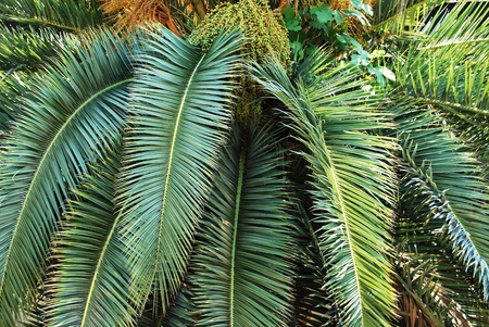 Palm tree trunk and leaves Stock Photo - 18689853