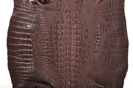 The natural brown crocodile leather photo