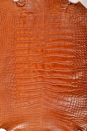 imitation leather: The natural brown crocodile leather isolated on white background