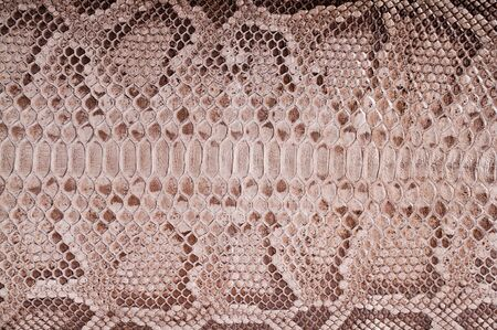 subsequently: Subsequently painted natural python skin close up
