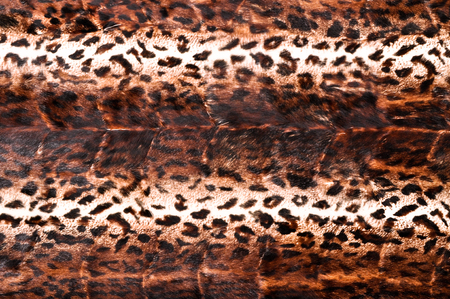 Leopard leather texture closeup can be used as backgroud