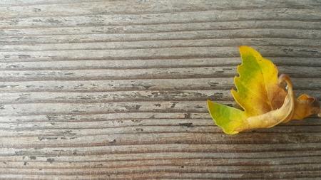 hoja de otoño verde amarillo Foto de archivo
