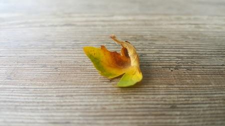 leaf, canvas autumn leaf Banco de Imagens