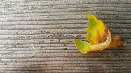 hoja, lienzo hoja de otoño