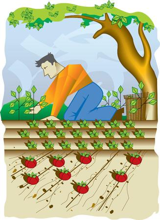 tomate de arbol: La agricultura Vectores
