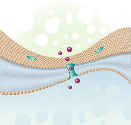 membrane cellulaire: derniers mol�cules de cellules humaines et de la membrane cellulaire Illustration