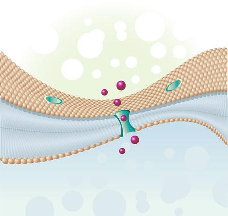 human pile: ultimi molecole di cellule umane e membrana cellulare Vettoriali