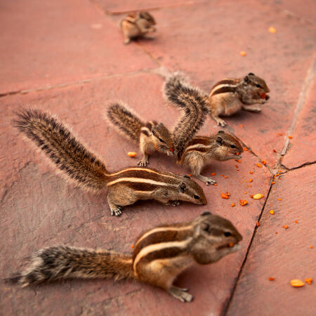 A group of chipmunks eating nuts in the park photo