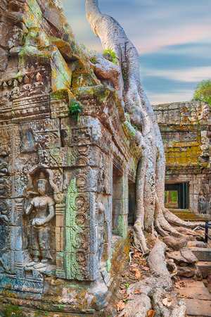 angelina jolie: Ta Prohm famouse giant tree with ancient roots