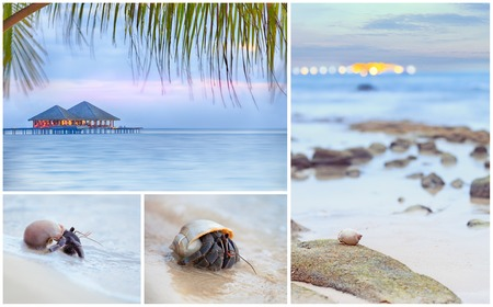 gentle dream vacation: Seascape collage. 4 high resolution images of the beach