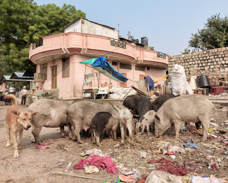 disposal dump in the middle of the asian street with stray animals eating Stock Photo