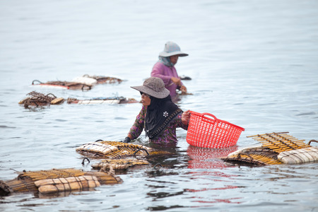soldier fish: KEP PROVINCE, CAMBODIA- DECEMBER 2014: Traditional asian fishing. Cambodian women soak in ocean to bring the catch of famous blue crabs to the shore