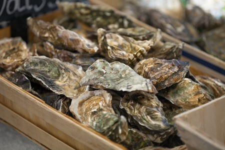 seafood platter: Traditional  fish market stall full of fresh shell oysters Stock Photo