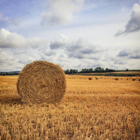 haymow: Round haystacks in the field with cloudy sky background
