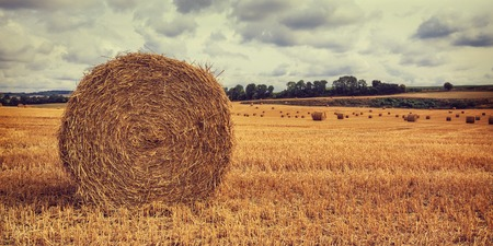 haymow: Round haystacks in the field with cloudy sky background. Creative filter effect