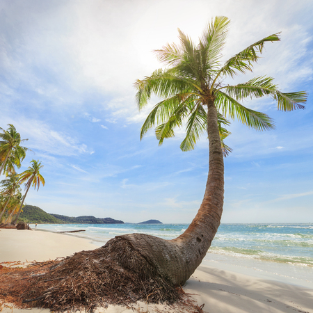 travel background.  palm trees on secluded beach with white sand Stock Photo