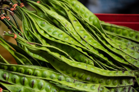 guar: Close-up shot of exotic asian giant green beans Stock Photo
