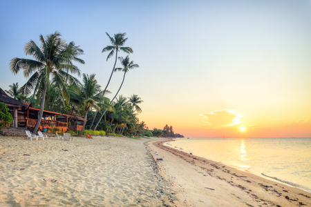 Sunset beach with white sand and tall palms