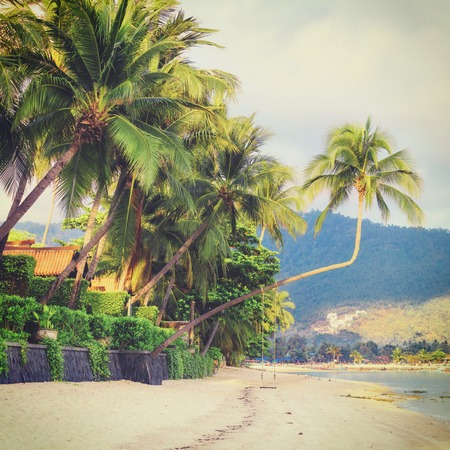 downshift: Empty morning Samui beach with tall palmtrees and rocks