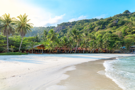Phangan beach with white sand and tall palms