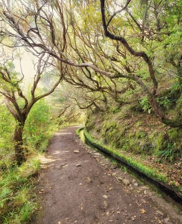 laurel mountain: 25 fountains levada tracking path going though deep forest. Madeira island, Portugal