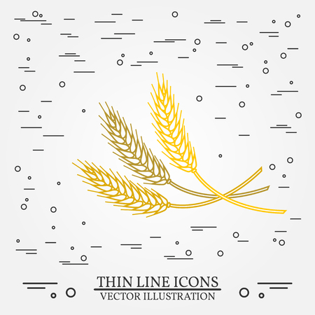 grain fields: Ears of grain thin line design. Illustration