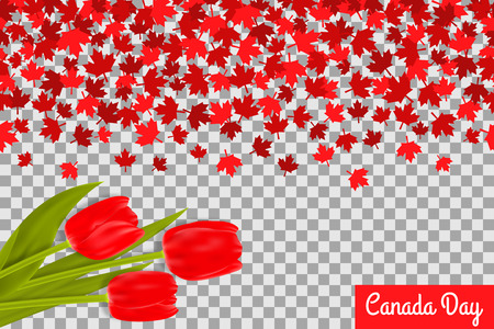 canadian flag: Canada day background with maple leafs and tulips for 1st of July celebration on transparent background.