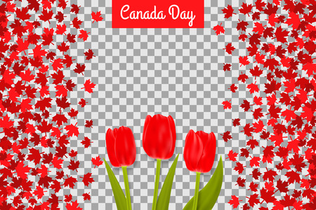 Canada day background with maple leafs and tulips for 1st of July celebration on transparent background.