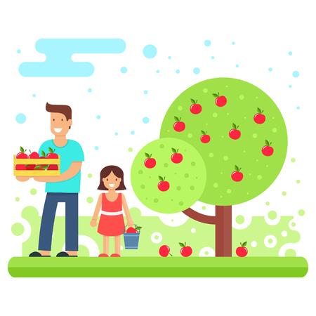 Een gelukkige familie verzamelt appelteelt.