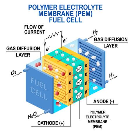 Diagrama de pila de combustible. Vector. Dispositivo que convierte la energía potencial química en energía eléctrica. Una celda de membrana de intercambio de protones PEM utiliza gas hidrógeno y gas oxígeno como combustible.