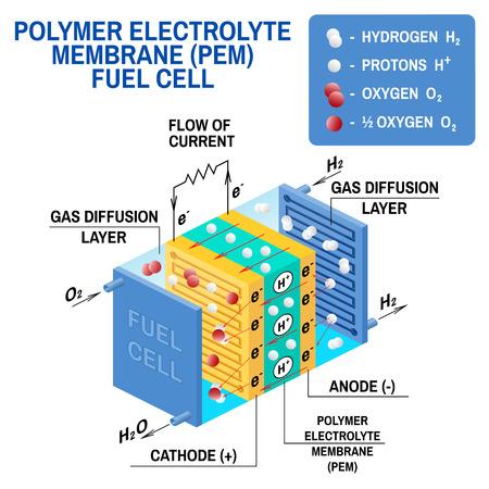 Diagramm der Brennstoffzelle. Vektor. Gerät, das chemische potentielle Energie in elektrische Energie umwandelt. Eine PEM-Zelle mit Protonenaustauschmembran verwendet Wasserstoffgas und Sauerstoffgas als Brennstoff.