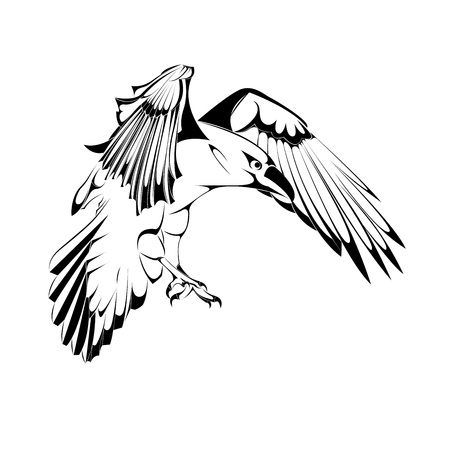 Sketch of Crow in Vector illustration