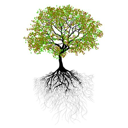 vector illustration beautiful tree with green leaves and roots Ilustração