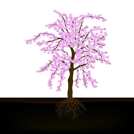 vector illustration of a beautiful cherry tree 向量圖像