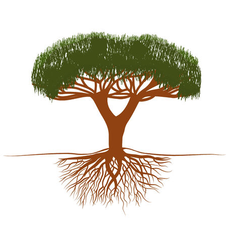 vector illustrationbonsai tree with roots 向量圖像