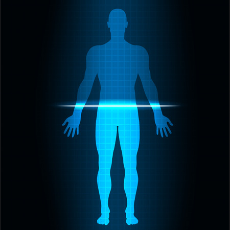 male body: vector illustrationScan human