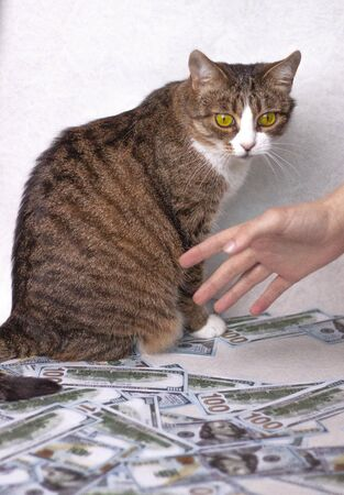 The cat sits and guards a lot of money the hand reaches out to pick up the money