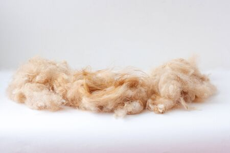 On the white surface lies a pile of shorn dog hair Stok Fotoğraf