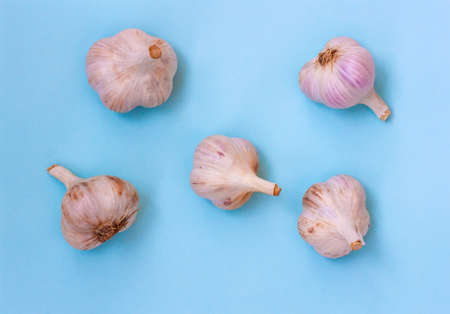 Five large heads of garlic lie on a blue background, Flatley
