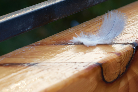 slight: feather