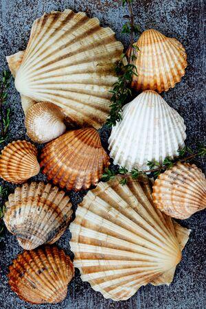 Seafood shells on dark wooden background. Zdjęcie Seryjne