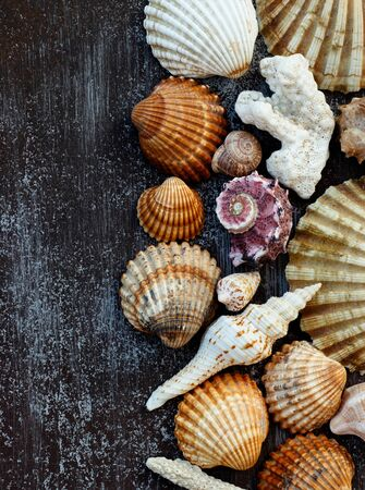 Multicolored shells and corals on a dark wooden background.