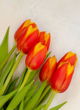 Bouquet of red and yellow tulips on a light textured background diagonally Stock Photo