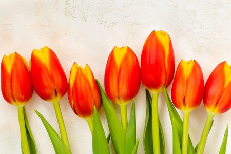 Bright tulips, red and yellow, on a light textured background. Vertical or horizontal format