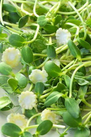 Healthy food: micro-greens and mini corn salad. Vegetarian, vegan and special diet food